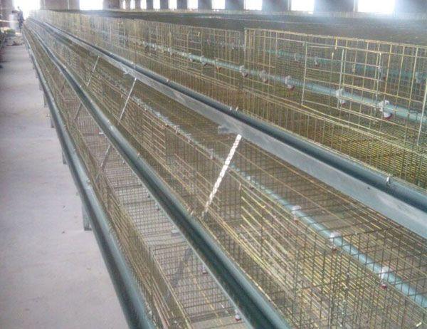 蛋鸡专用鸡笼