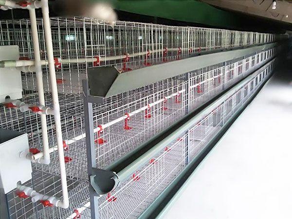 自动化养鸡设备