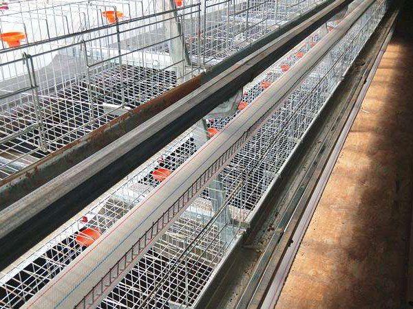 全自动蛋鸡养殖设备