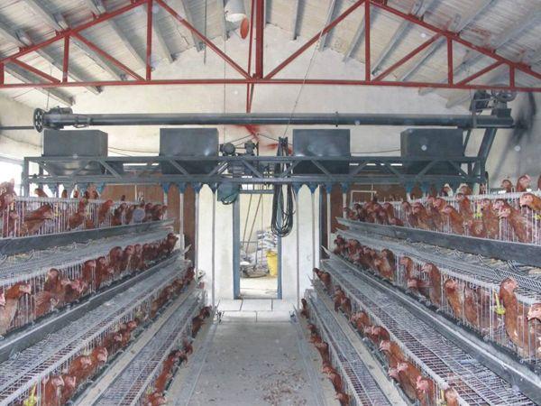 养鸡场自动给料机